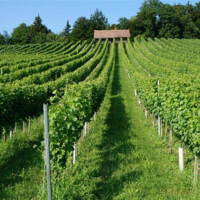 Posebna lega vinograda